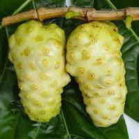 buah noni,Buah Pencegah Penyakit Stroke,Buah Pencegah kolesterol tinggi,Buah Pencegah hipertensi,Buah Pencegah penyakit jantung