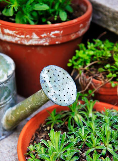 trädgårdsbloggar terracotta vattenkanna inspiration trädgårdsdesign