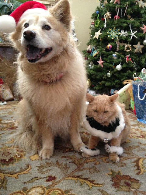 Funny Christmas cat and dog