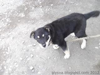 фото пса