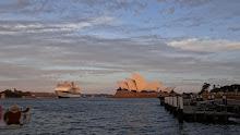 Quatchi returns to Sydney