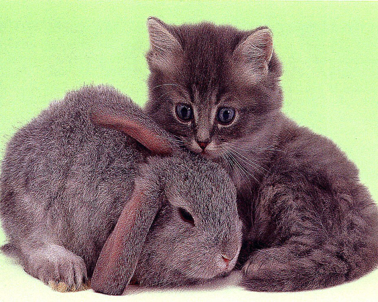 Best Jungle Life: Baby Animals & Baby Animal Pics & Baby ...