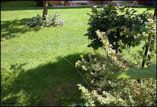 Un giardino di perenni in ticino come creare un aiuola di perenni