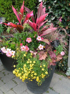 Summer container at Toronto Botanical Garden by garden muses-not another Toronto gardening blog