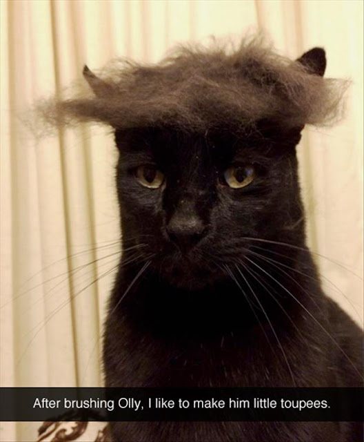 http://www.dumpaday.com/random-pictures/funny-pictures/funny-pictures-day-77-pics-5/attachment/brushing-cat-hair/