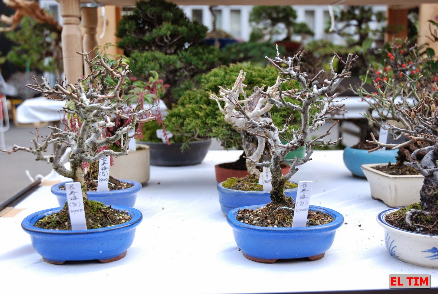 El Tim Bonsai: 27/04/14 - 4/05/14