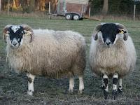 Alles vom Schaf/Wolle + mehr