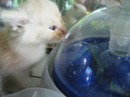 Mata Kucing Bertukar Kuning Cara Kenali Usia Anak Kucing