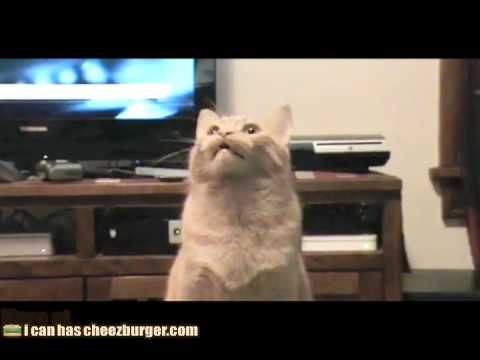 Funny Cats Cat Videos Looking Video