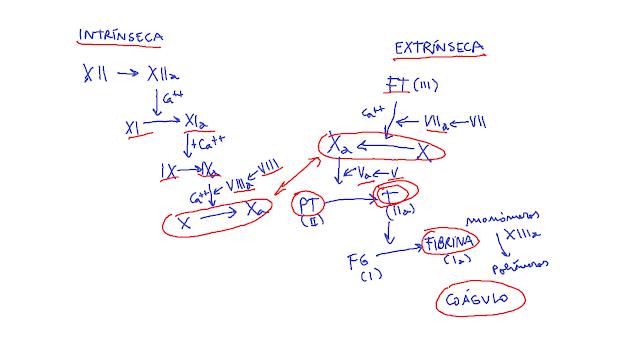 hemostasia secundaria, coagulación, cascada de la coagulación