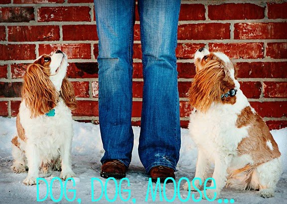 Dog, Dog, Moose