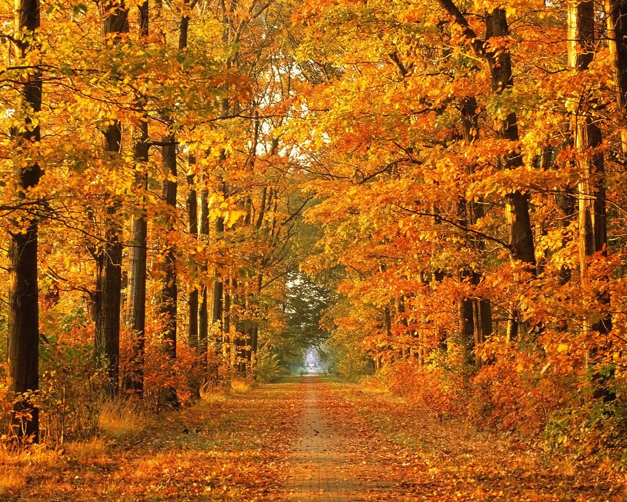 Autumn Wallpapers | Walpaper Share walpaper share