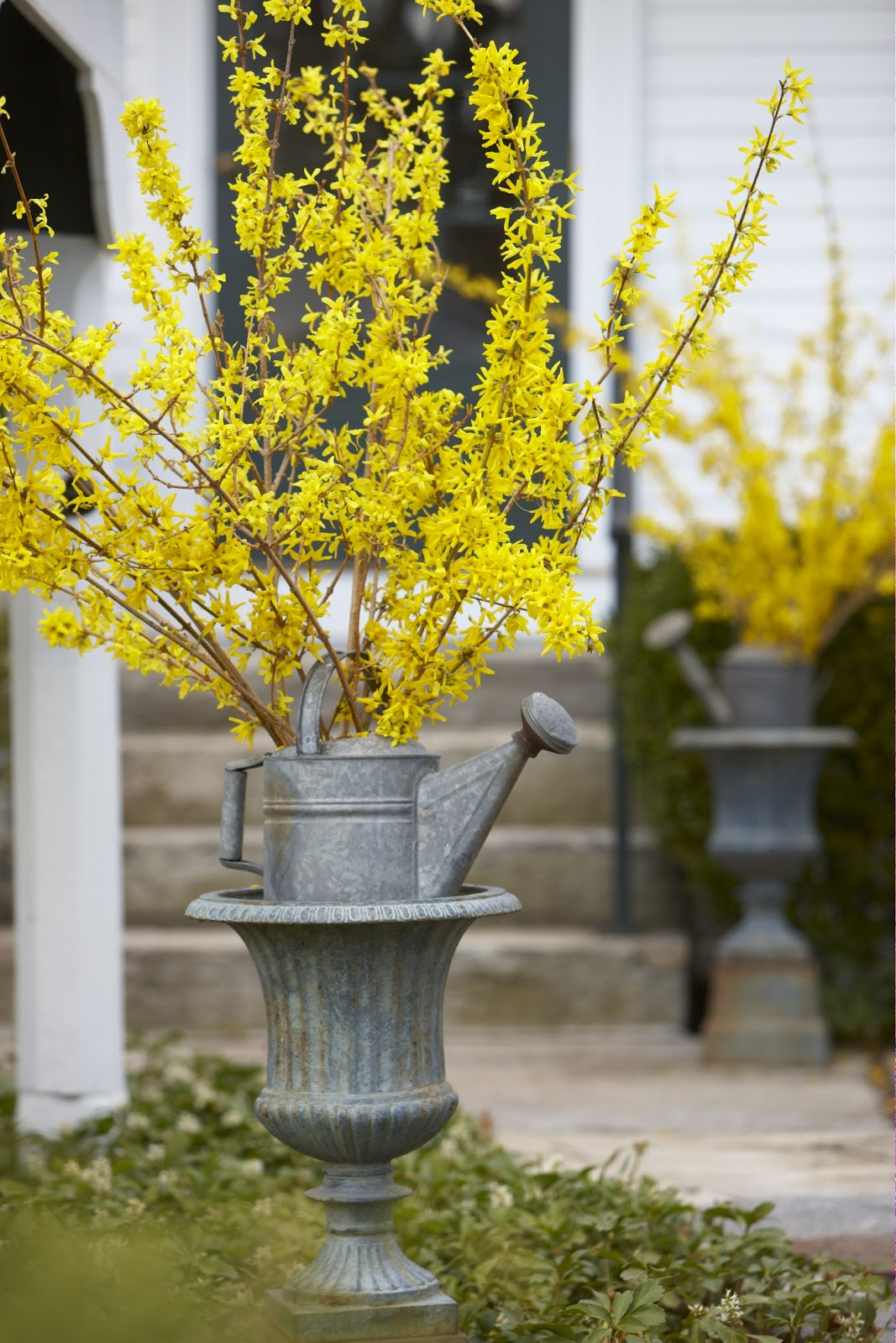 of screaming yellow to your floral arrangements you can enjoy forsythia branches weeks ahead of natures schedule by taking cuttings into your home and - Forsythia Arrangements