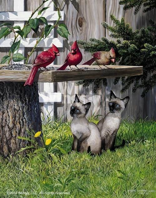 две сиамские кошки