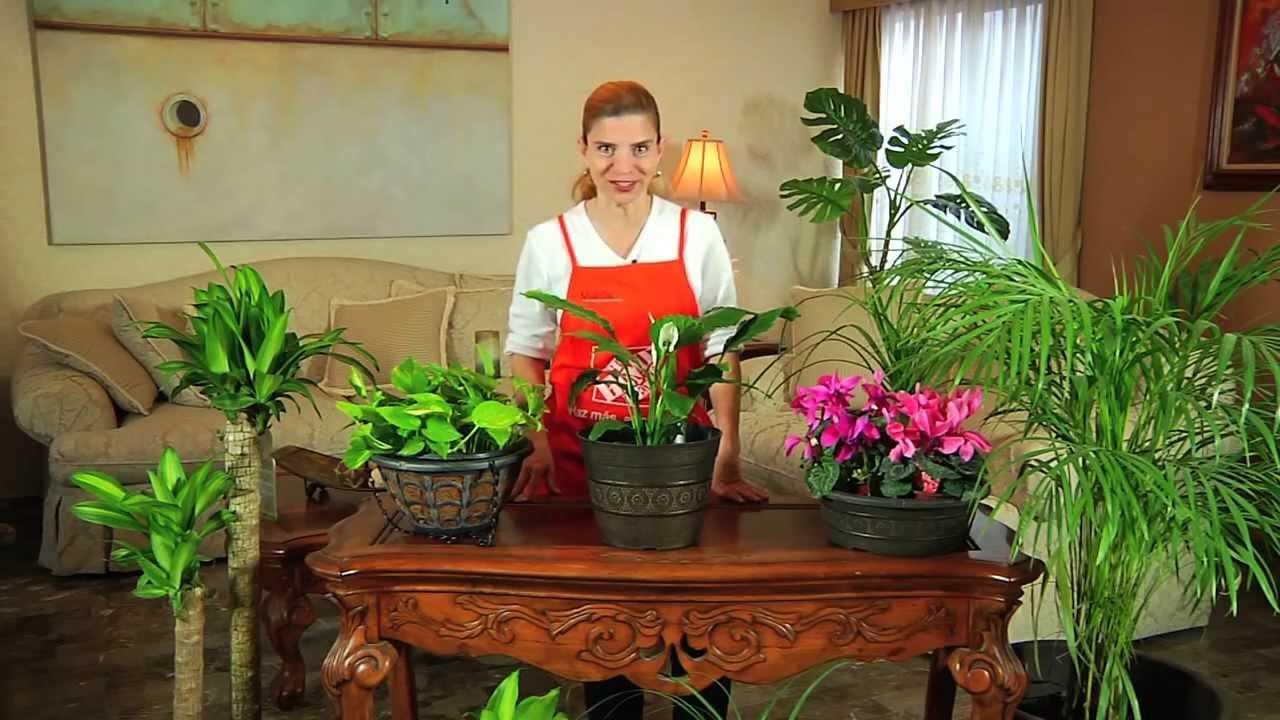Como iniciar su negocio de cuidado de plantas de interior ideas de negocio - Plantas de interior cuidados ...