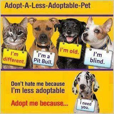 Rescue & Adopt Poster