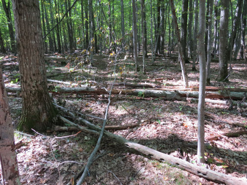 trees down on trail