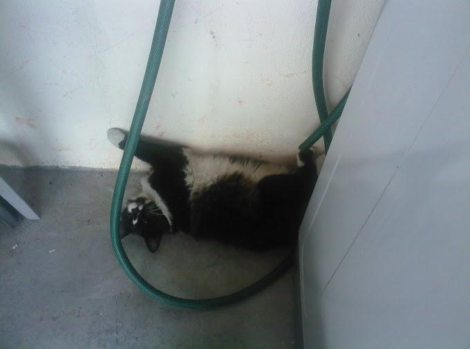 kucing gemok bukan milik saya