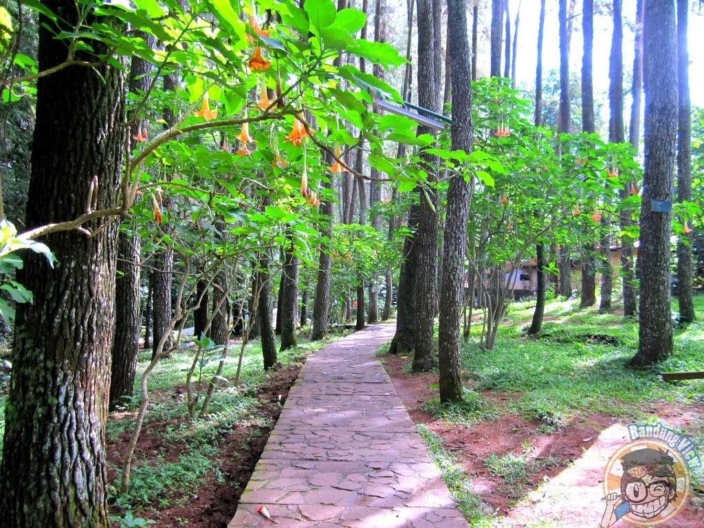 jogging track Taman Hutan Raya Ir. H. Djuanda Bandung