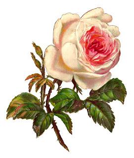 stock rose digital image