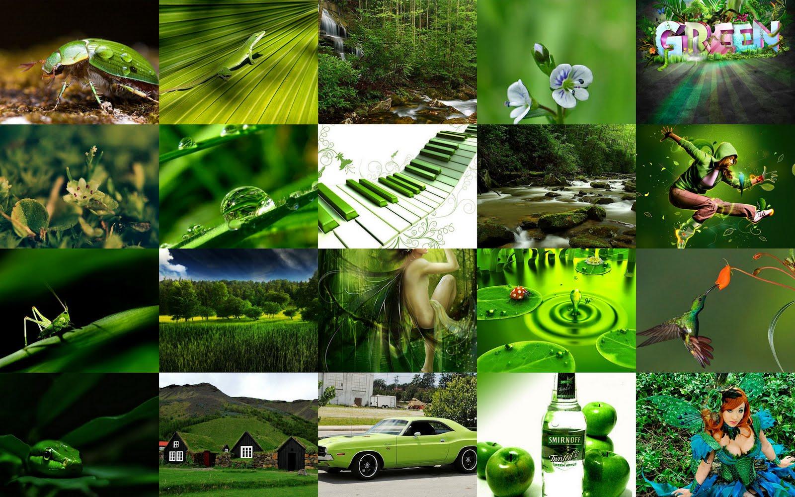 Wallpaper de imágenes verdes en resolución de 1920x1200px