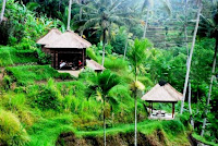 Best Honeymoon Destinations In Asia - Ubud, Bali, Indonesia