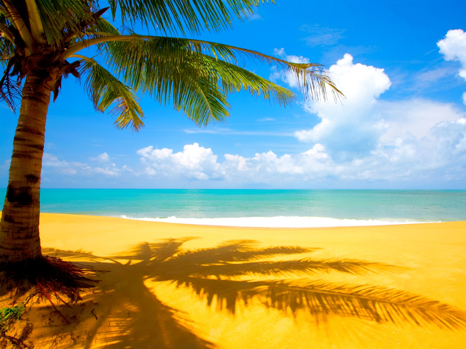 http://1.bp.blogspot.com/-vAcUBnCzw2k/TckaRQQkZOI/AAAAAAAAAE4/xPpOD_l22ks/s1600/palm-tree-beach-wallpaper.jpg