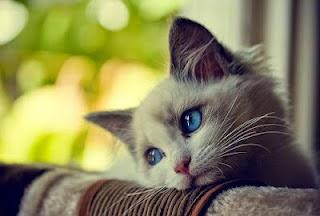 kucing gaul dan lucu