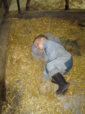 farmer boy sleeping in tiestall barn