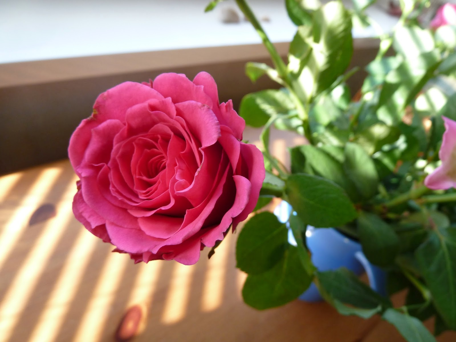 Frilly pink rose against stripes of light