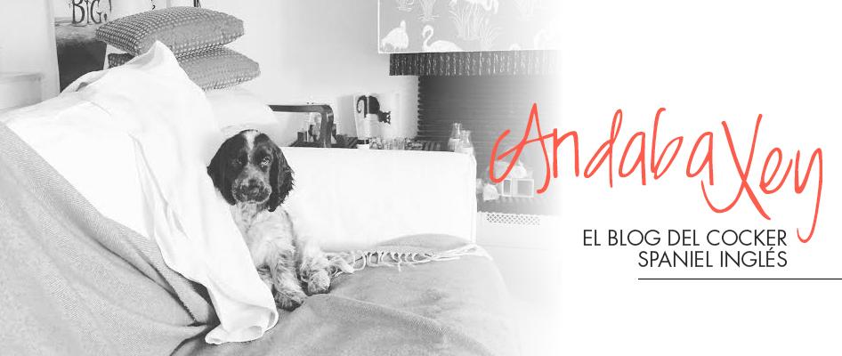 Andaba Xey