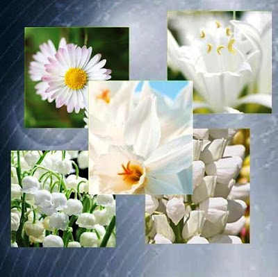 5 Intelligent White Flowers