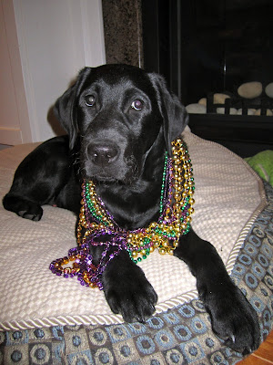 4 month old black lab puppy Romero is lying on his round dog bed in front of an unlit fireplace. Hanging around his neck are about 10 shiny gold, green, and purple strings of Mardi Gras beads. His head is slightly turned and you can see his little whiskers around his muzzle. He looks very sweet and innocent, and festive of course.