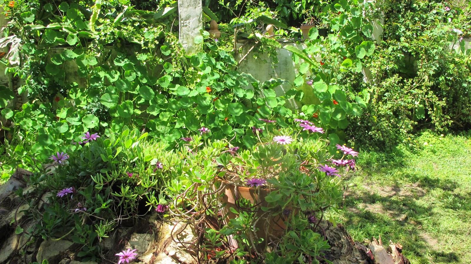 Pueblo de zahora barbate plantas del huerto y del for Asociacion de plantas en el huerto