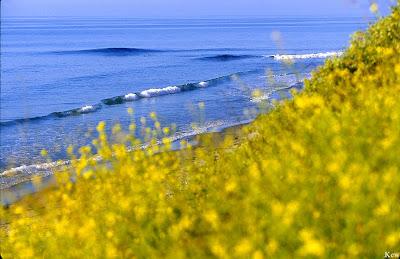 photo de surf 8914
