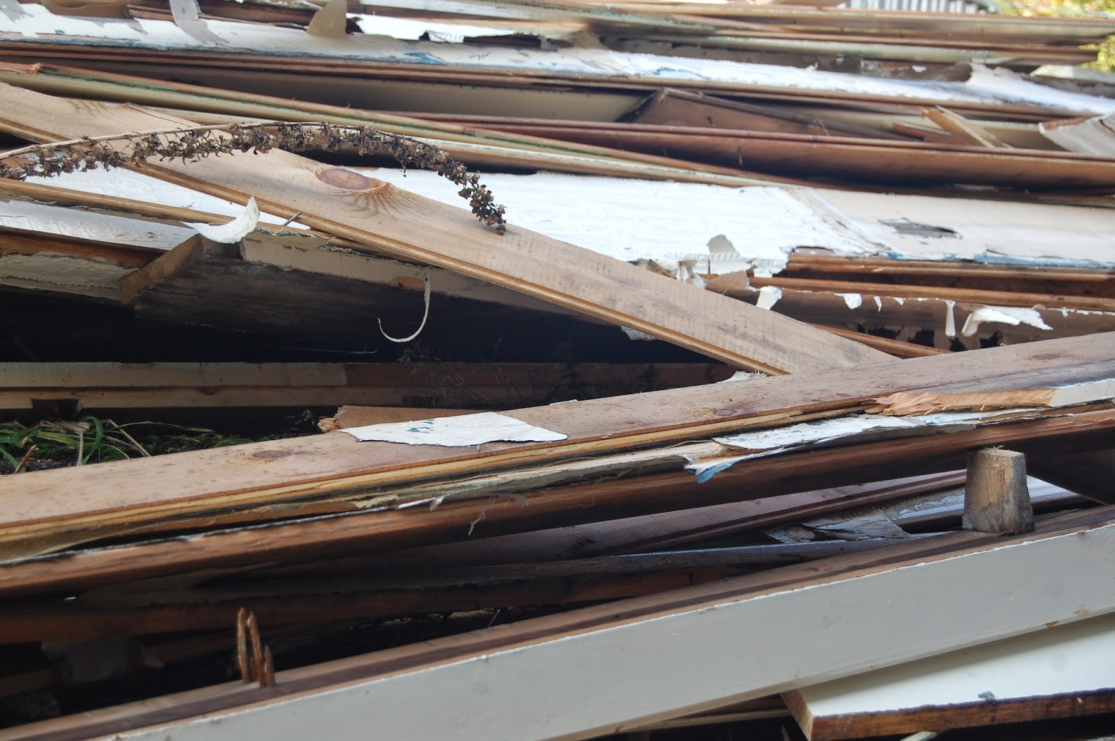 How old wood has a life after #lifeonpigrow