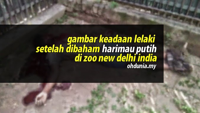 Gambar Keadaan Mayat Lelaki Malang Setelah Dibaham Harimau Putih
