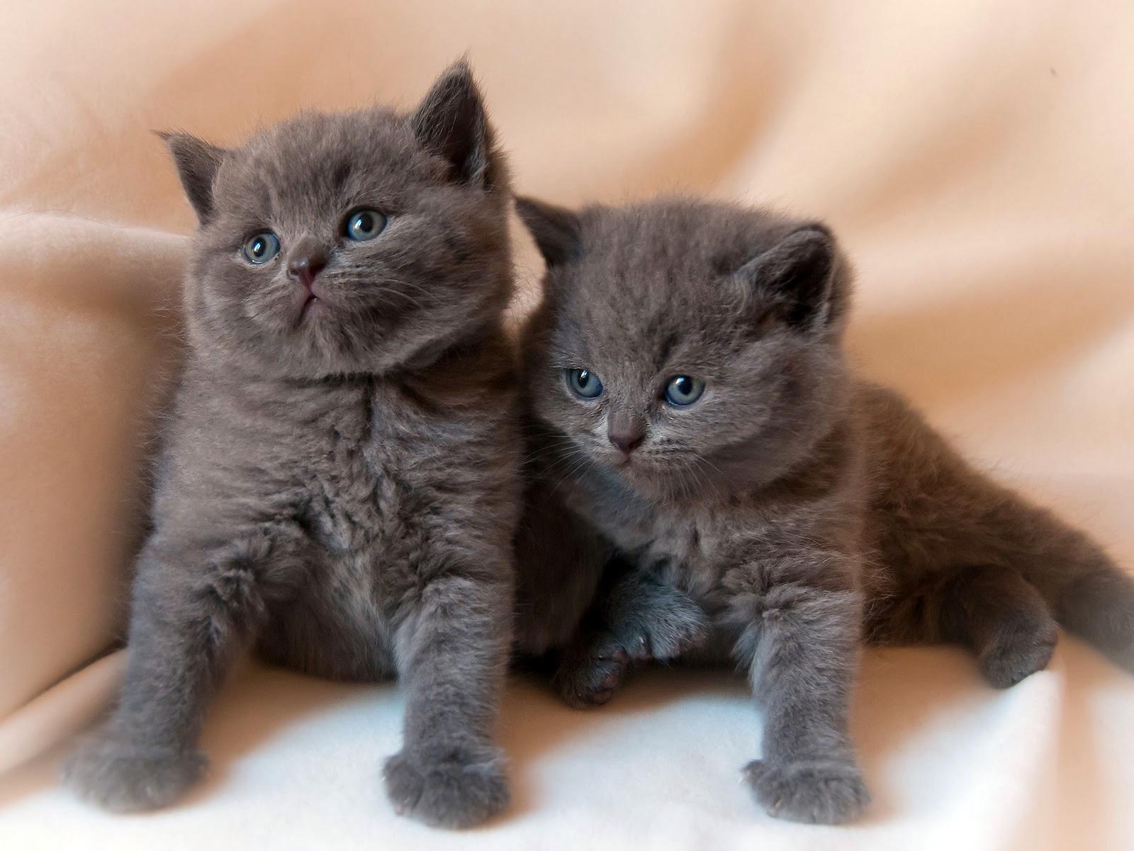 Fotos de gatitos bebes Mejores fotos del mundo para facebook