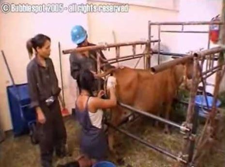 Explicit Sex Scenes with Kind Farm Animals