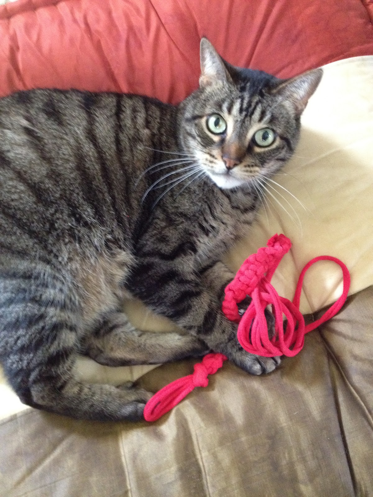 Upcycled stuff a cat toy made of t shirt yarn ive been experimenting with cat toyseap easy diy cat toys i found one thats been a real hit with the kitties as gremlin demonstrates here reviewsmspy