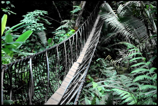 journeys into the unknown: Bukit Gasing Forest Park