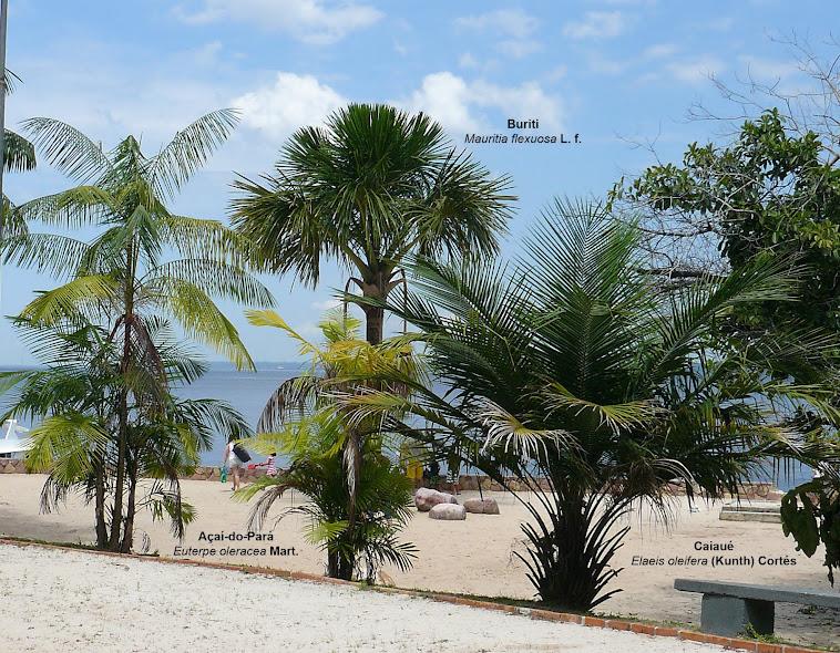 Palmeira Ponta Negra-Tropical Hotel