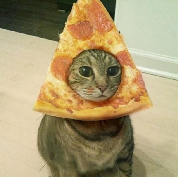 Funny cats - pizza head cat