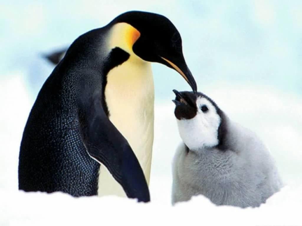 http://1.bp.blogspot.com/-vE6vq-yUVbI/TjmN07o0pzI/AAAAAAAAAOE/ie_ly22n1Ls/s1600/Penguin+Wallpapers+2.jpg