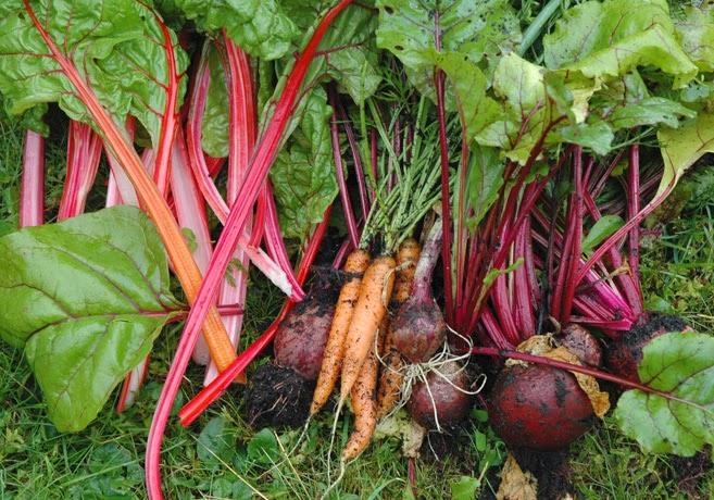 En blandning av nyskördade grönsaker