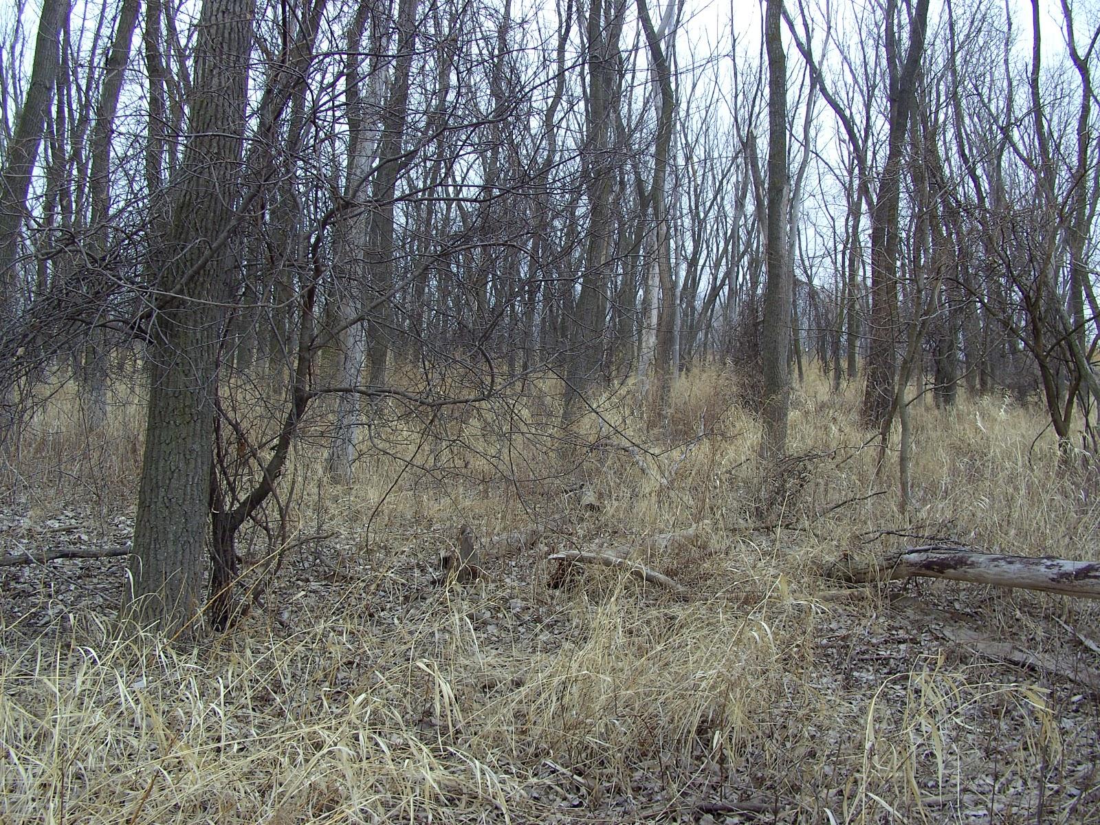 http://1.bp.blogspot.com/-vEIjLvGYhI0/TZEkpXyq0EI/AAAAAAAAAEE/QdQqFxmNMtg/s1600/wooded+area.jpg