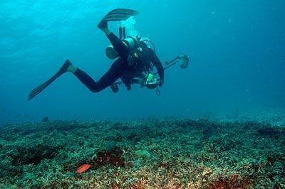 Kerugian Ekonomi Akibat Kerusakan Laut 2 T Dolar AS - AQUACULTURE ...