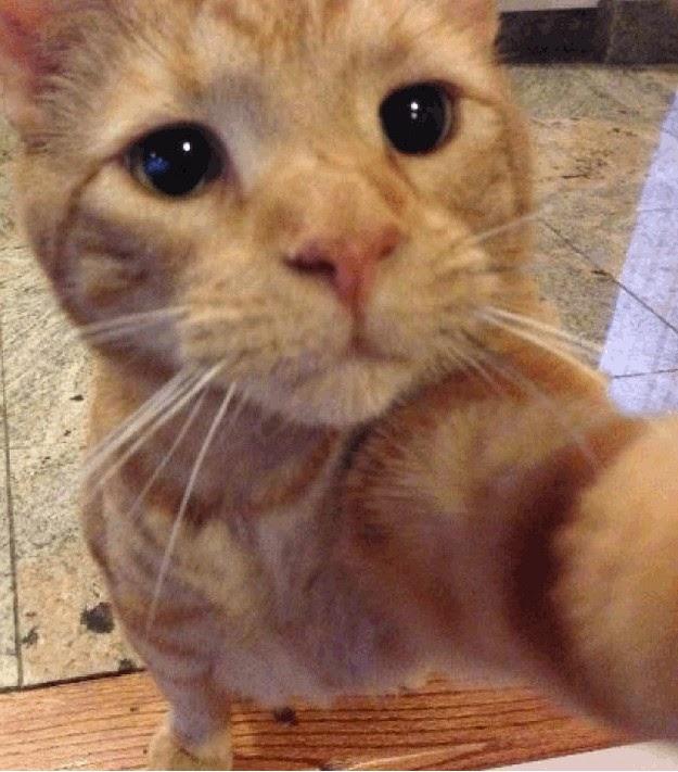 most-hilarious-selfies-3