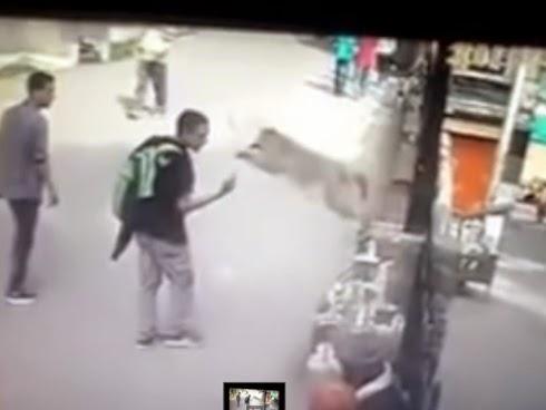 Diserang monyet selepas tunjuk isyarat lucah