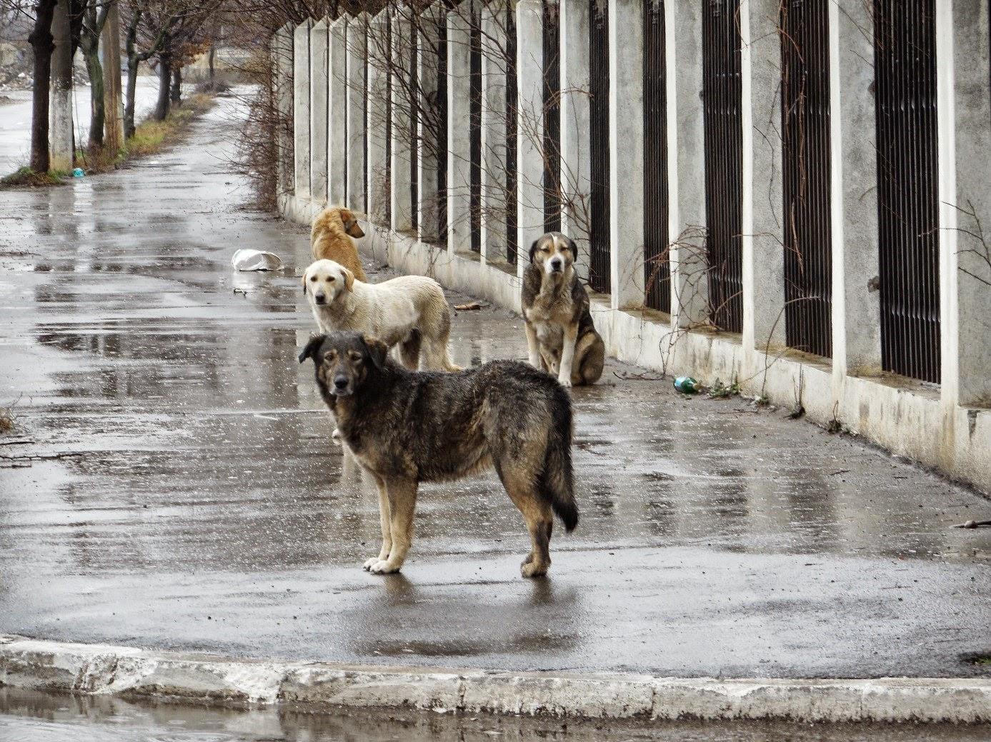 Romanian Rescue Dogs Nottingham